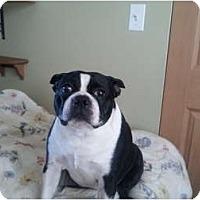 Adopt A Pet :: Jake - Maple Park, IL