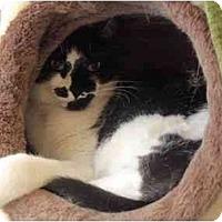 Adopt A Pet :: Tux - El Cajon, CA