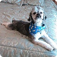 Adopt A Pet :: Herbie - New Milford, CT