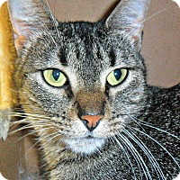 Adopt A Pet :: Chasity - white settlment, TX