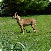Adopt A Pet :: Georgia - Woodstock, IL