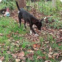 Adopt A Pet :: Mona Lisa - Lawrenceville, GA