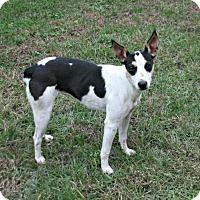 Adopt A Pet :: Joy - Lufkin, TX
