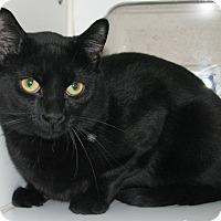 Adopt A Pet :: Booky - New Kensington, PA