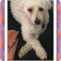 Adopt A Pet :: Adopted!!Hudson - FL - Tulsa, OK