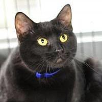 Adopt A Pet :: Pepsi - Yukon, OK