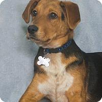 Adopt A Pet :: Larry - Elmwood Park, NJ