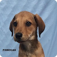 Adopt A Pet :: Finnegan - East Sparta, OH