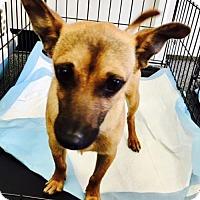 Adopt A Pet :: Oscar - Christiana, TN