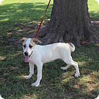 Adopt A Pet :: A25 James - Odessa, TX