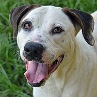 Adopt A Pet :: 10312003 GUS - Brooksville, FL