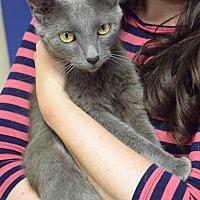 Adopt A Pet :: Karena (Has Application) - Washington, DC