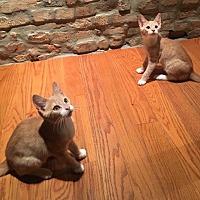 Adopt A Pet :: Filter & Franklin - Philadelphia, PA
