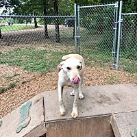 Adopt A Pet :: Hugo 17 - Brookhaven, MS