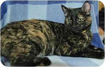 Domestic Shorthair Cat for adoption in Pendleton, Oregon - Eva