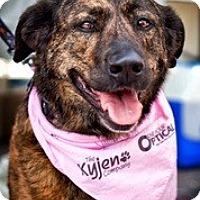 Adopt A Pet :: Teaker - Loveland, CO