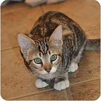 Adopt A Pet :: Maxwell - Modesto, CA