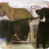 Adopt A Pet :: LUCAS - Mahopac, NY