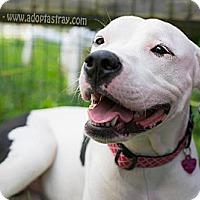 Adopt A Pet :: Elsa - Newport, KY