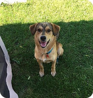 Shepherd (Unknown Type) Mix Dog for adoption in Saskatoon, Saskatchewan - Chance