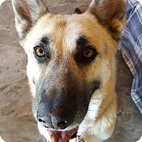 Adopt A Pet :: Layla - Super Sweet! - Bend, OR