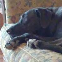 Labrador Retriever Mix Dog for adoption in Conroe, Texas - Luna