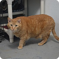 Adopt A Pet :: Rocky - Grinnell, IA