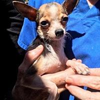 Adopt A Pet :: Freya - Temecula, CA