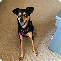 Adopt A Pet :: Lima - San Diego, CA