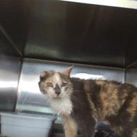 Adopt A Pet :: callie - Henderson, KY