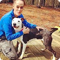 Adopt A Pet :: Pearl - Massachusetts - Fulton, MO