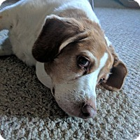 Adopt A Pet :: Avery - in Maine - kennebunkport, ME