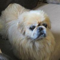 Adopt A Pet :: Gus - Oakdale, TN