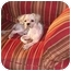 Photo 4 - Shih Tzu/Poodle (Miniature) Mix Dog for adoption in Brooklyn, New York - McGee