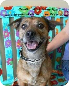 Australian Cattle Dog/Dachshund Mix Dog for adoption in Houston, Texas - Sophie
