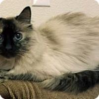Adopt A Pet :: Coconut - Colorado Springs, CO