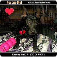 Adopt A Pet :: Lemony - Scottsdale, AZ