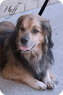 Spaniel (Unknown Type) Mix Dog for adoption in Fort Worth, Texas - HUFF