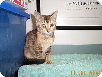 Domestic Mediumhair Kitten for adoption in Fayetteville, Georgia - Heidi