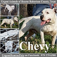 Adopt A Pet :: Chevy - Hearne, TX