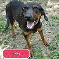 Adopt A Pet :: Brinx - Cincinnati, OH