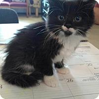 Adopt A Pet :: Katniss - Jefferson, NC