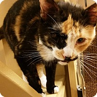 Adopt A Pet :: Alice (in CT) - East Hartford, CT