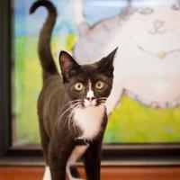 Adopt A Pet :: Fennel - Madison, GA