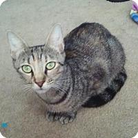 Adopt A Pet :: Lisbett - Melbourne, FL