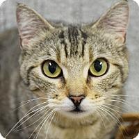 Adopt A Pet :: Fiona - Huntley, IL