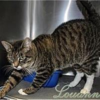 Adopt A Pet :: Louanne - Oak Ridge, TN