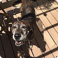 Adopt A Pet :: Johnny - Media, PA
