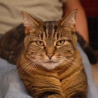 Adopt A Pet :: Stevie - Winchendon, MA