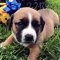 Adopt A Pet :: FISCHER - ADOPTION PENDING! - Pennsville, NJ